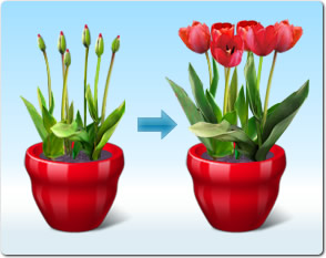Virtual Flowers in Growth